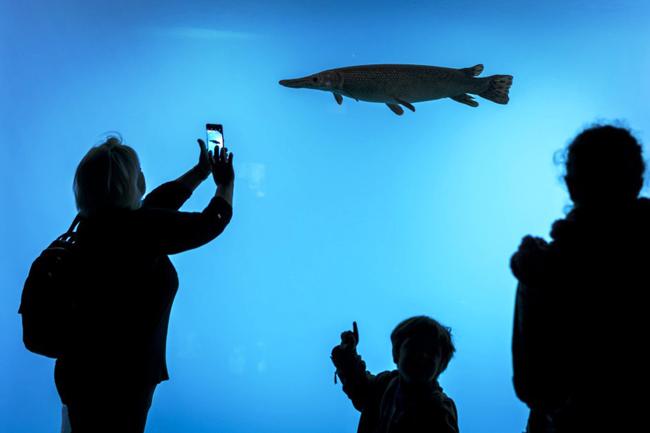 Откриха най-големия аквариум с прясна вода в Европа