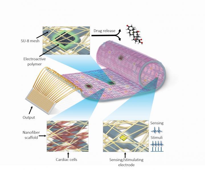 Изобретиха бионичен пластир, заместващ сърдечна тъкан