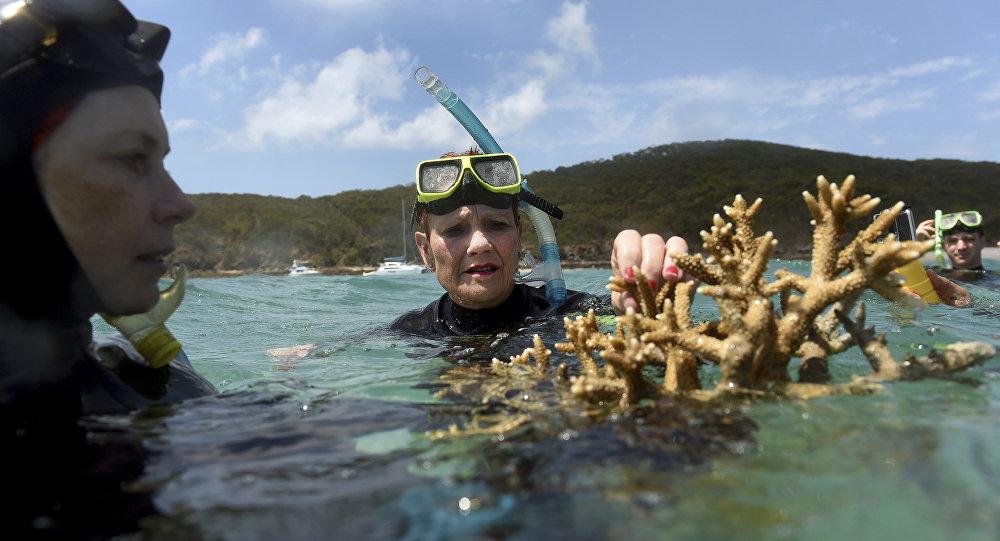 760 млн. долара може да загуби Австралия от пораженията върху Големия коралов риф