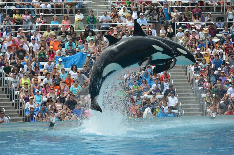 Thomas Cook спря част от туристическите пътувания до атракции с животни