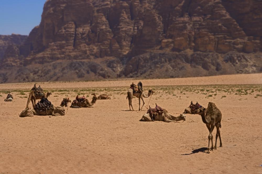 Четири причини да се посети Йордания