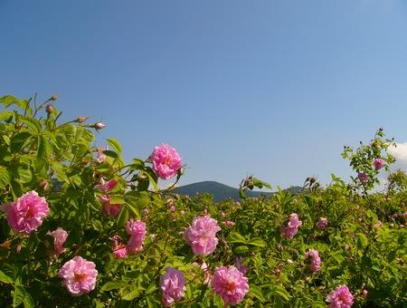 http://www.infotourism.net/images/9270.jpg
